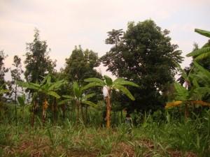 CongoBukavu2012340_zps58996e10