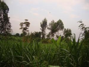 CongoBukavu2012343_zps9e86864c